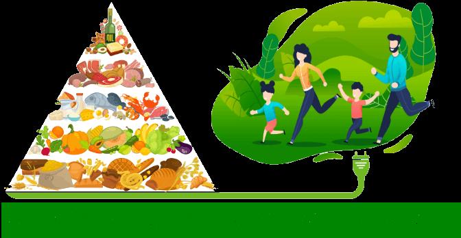 Apport de l'énergie en kiloJoules de notre alimentation