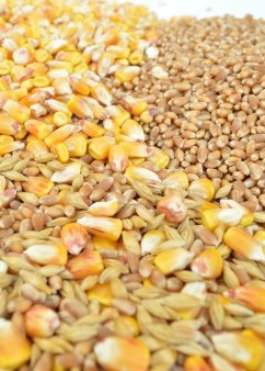 Riz céréales