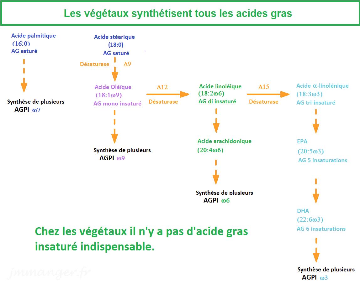 Les Acides gras végétaux