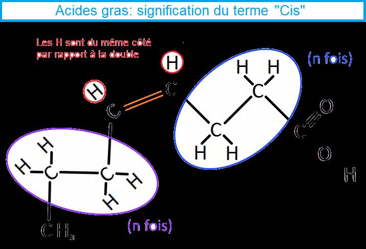 AG mono insaturés forme Cis
