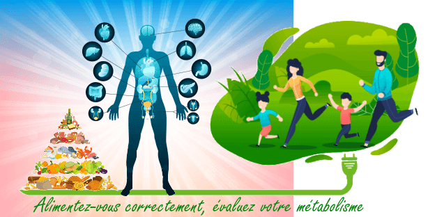Définition métabolisme de base et journalier